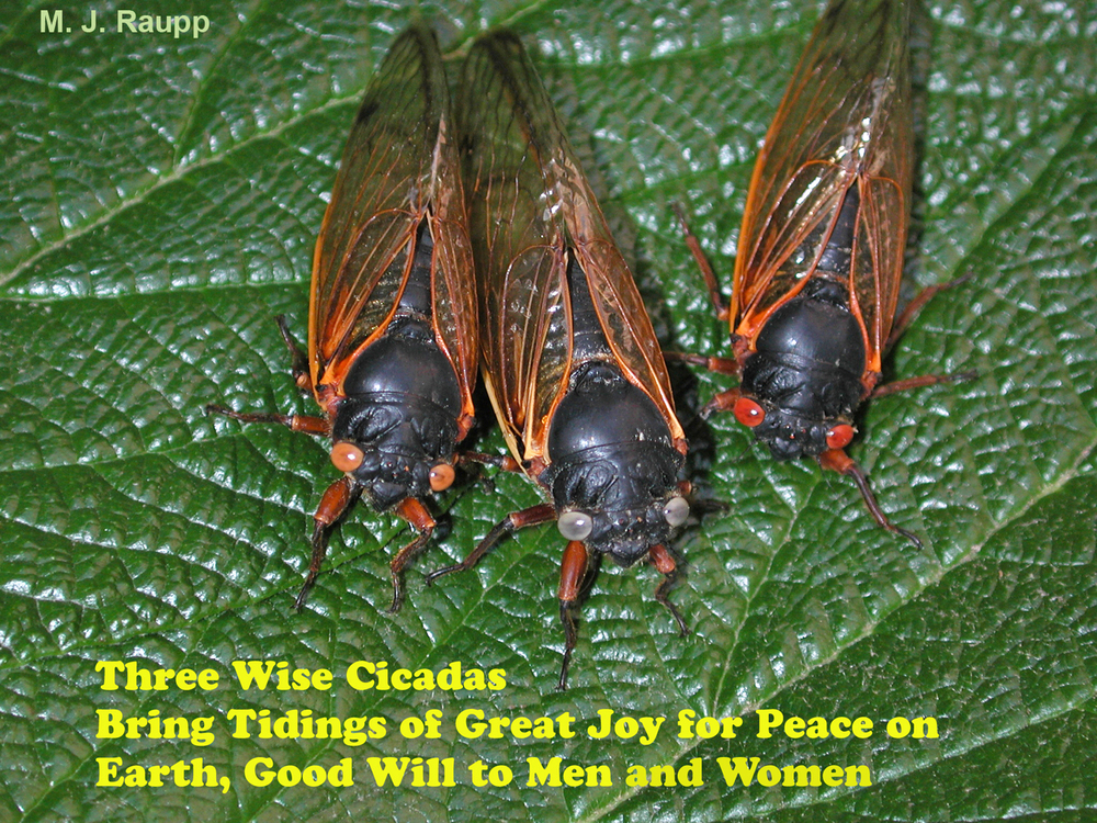 Three wise Brood II cicadas wish everyone a Happy Holiday season and joyous New Year.