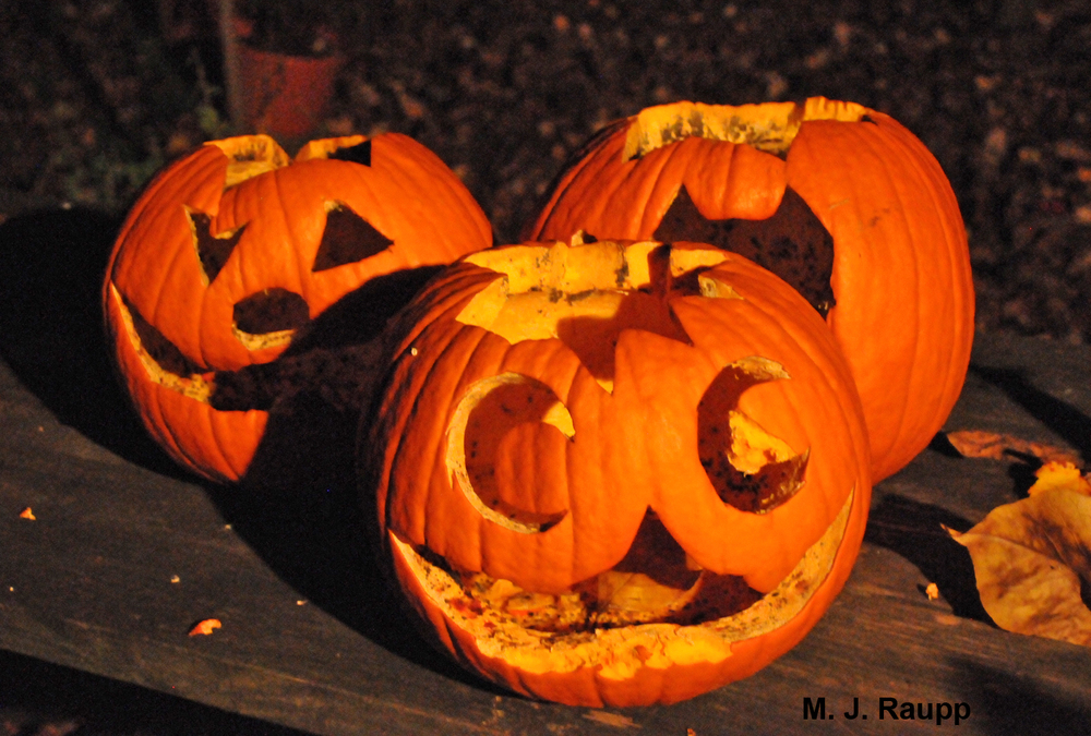 Jack O' Lanterns will soon be recycled by fruit flies.