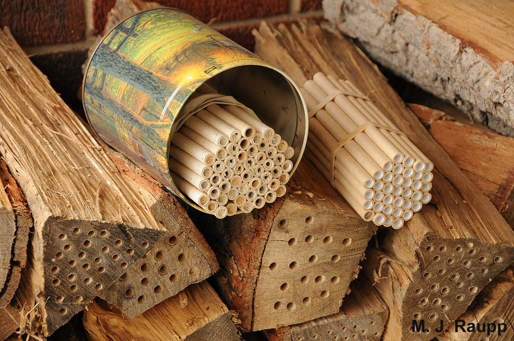 Cardboard tubes and drilled firewood make suitable accommodations for mason bees.