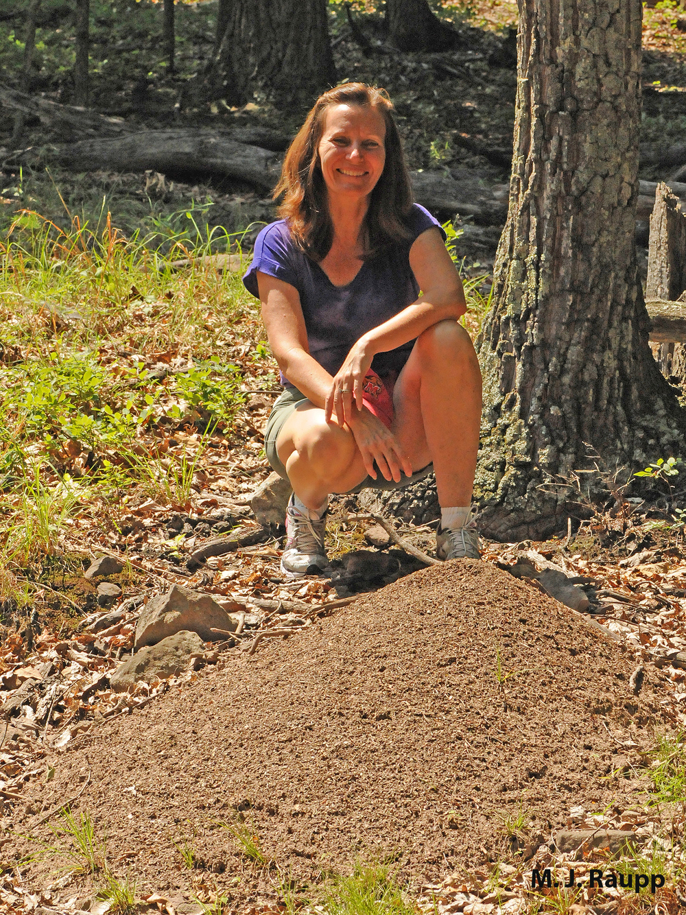 Even modest Allegheny mound ant nests can bring a smile to an entomologist's face.