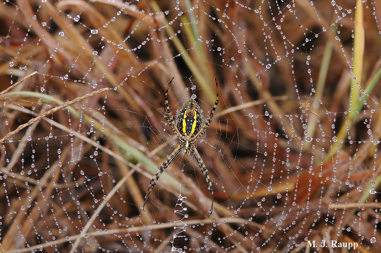 when morning dew glistens on silken strands its not hard to imagine why shimmering tinsel