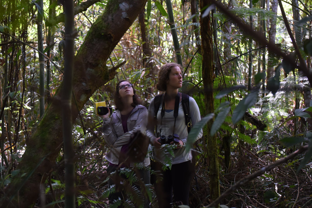 Megan Quirk and Melissa Petrich search for the new sleeping site of a group of night monkeys. Groups sometimes change sleeping sites seasonly or in the case of an disturbance.