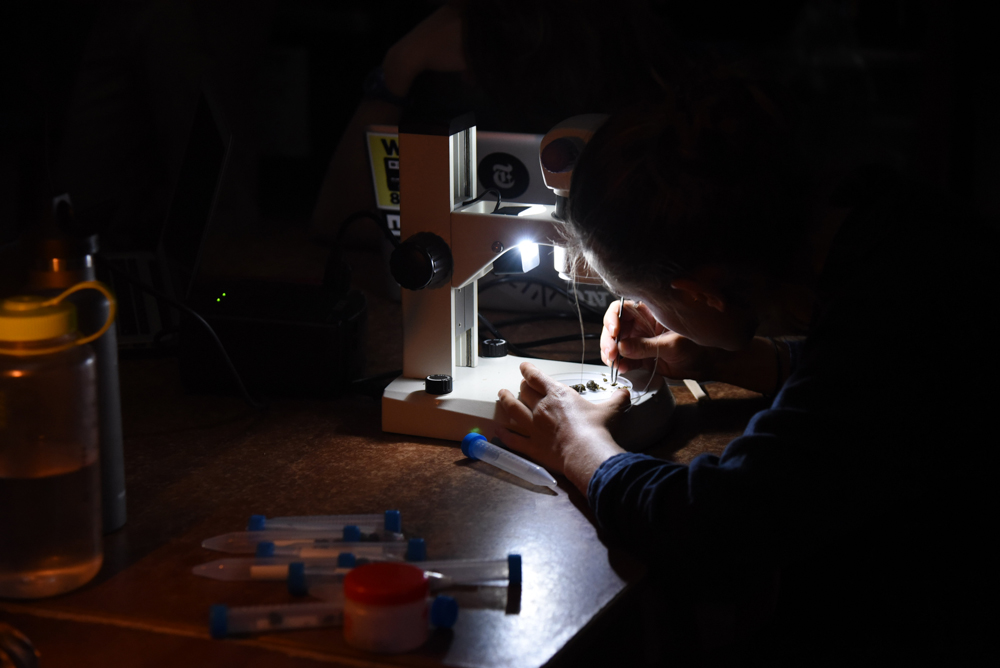 Isabelle Berman examines seeds in a night monkey fecal sample at the laboratory in Manu Learning Centre.