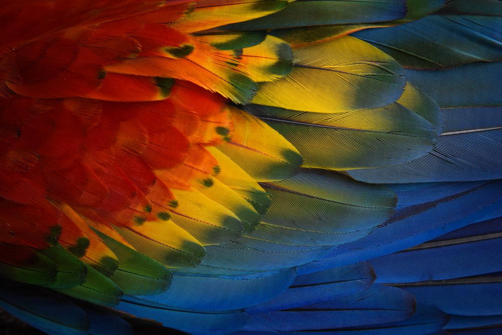 SuarezJessica_ConservationPortfolio1101.JPG