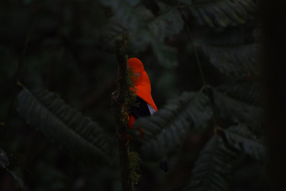 SuarezJessica_ConservationPortfolio1801.JPG