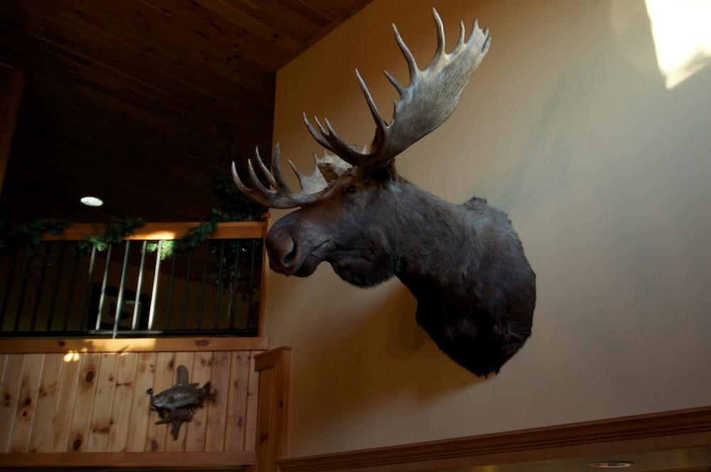 Where's my moose?