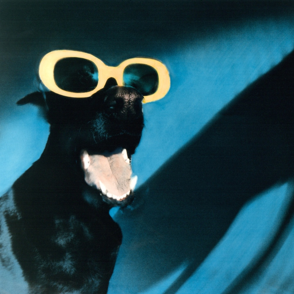 ©Siede-Preis Dog_in_Sunglasses.jpg