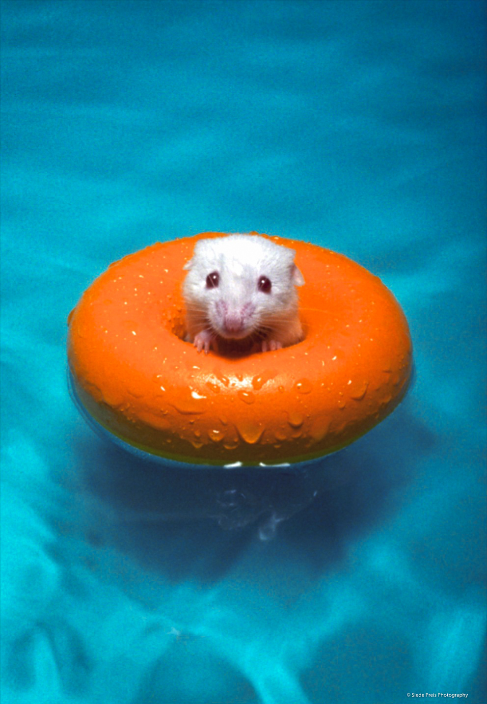 Siede-Preis-Photography-Mouse-Inner-Tube.jpg