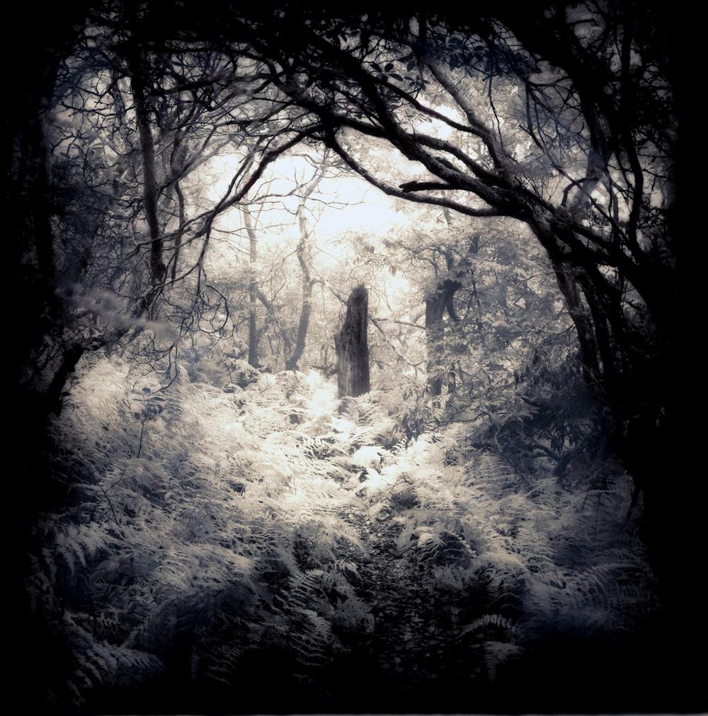 001_Into the Mist-2-2.jpg