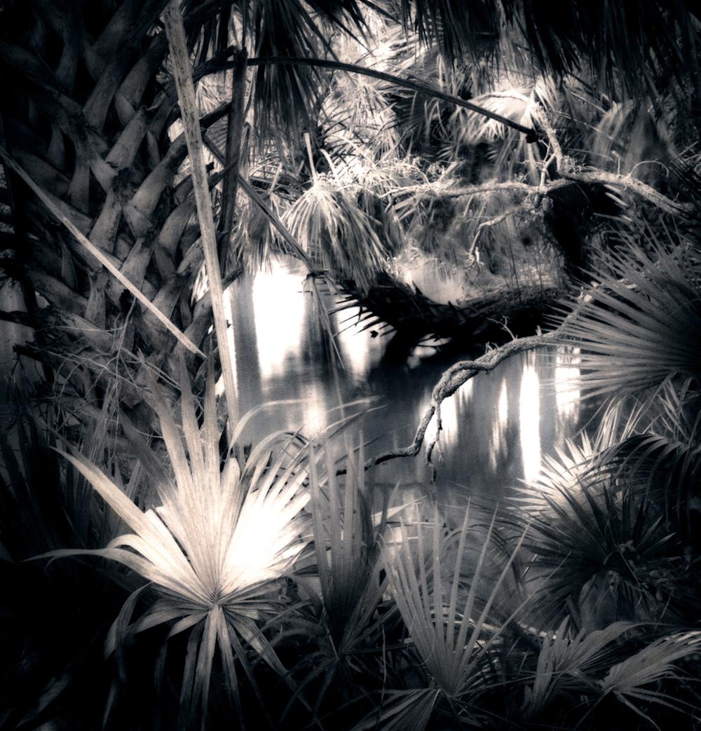 024_Swamp-2.jpg