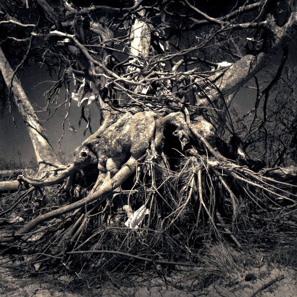 034_Crucified Tree.jpg
