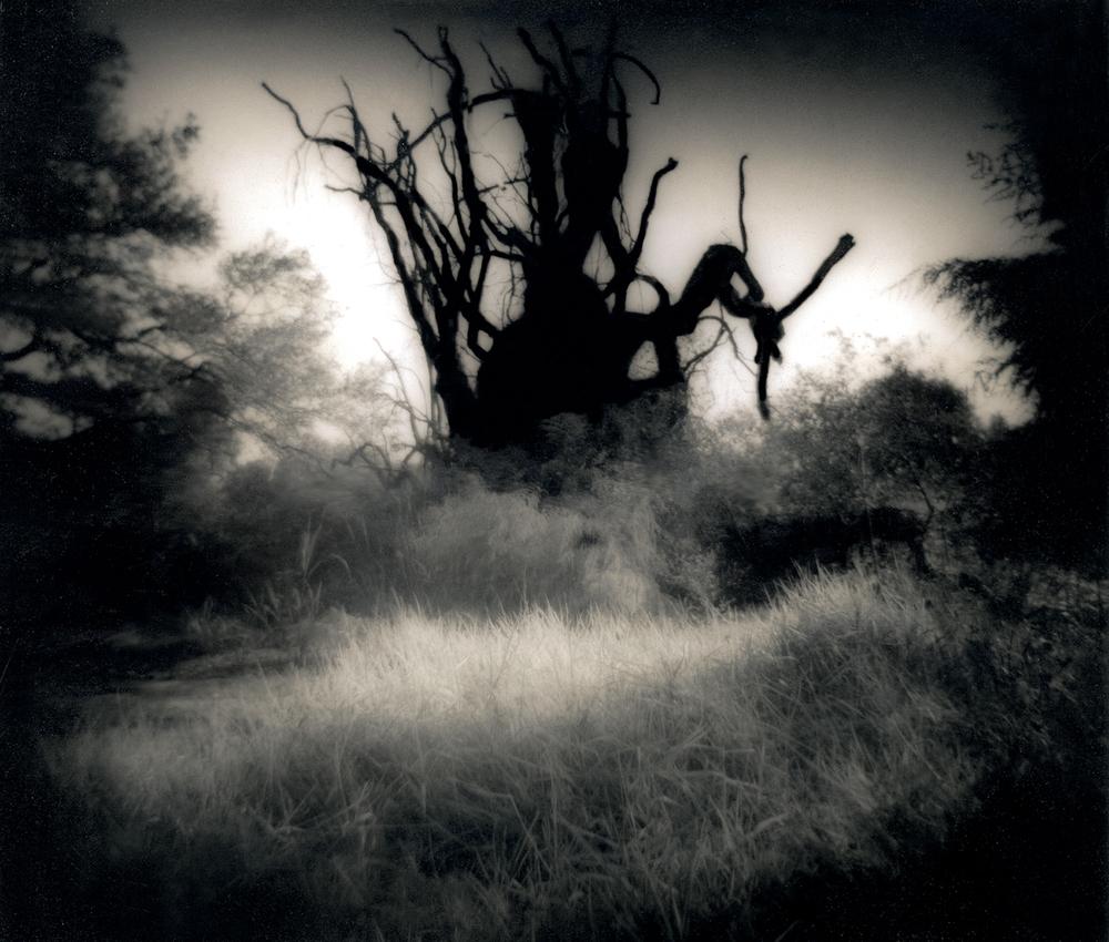 036_Tree Roots-2.jpg