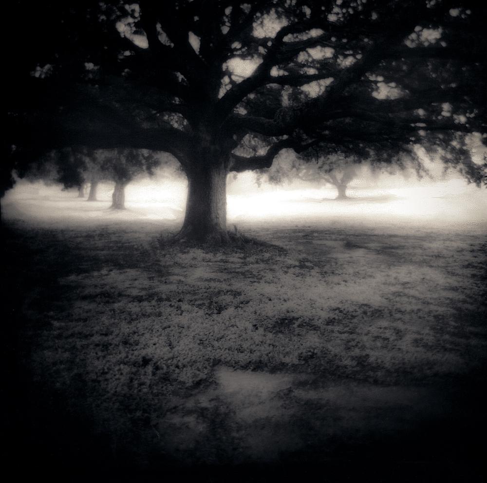 050_Misty Oak-2.jpg