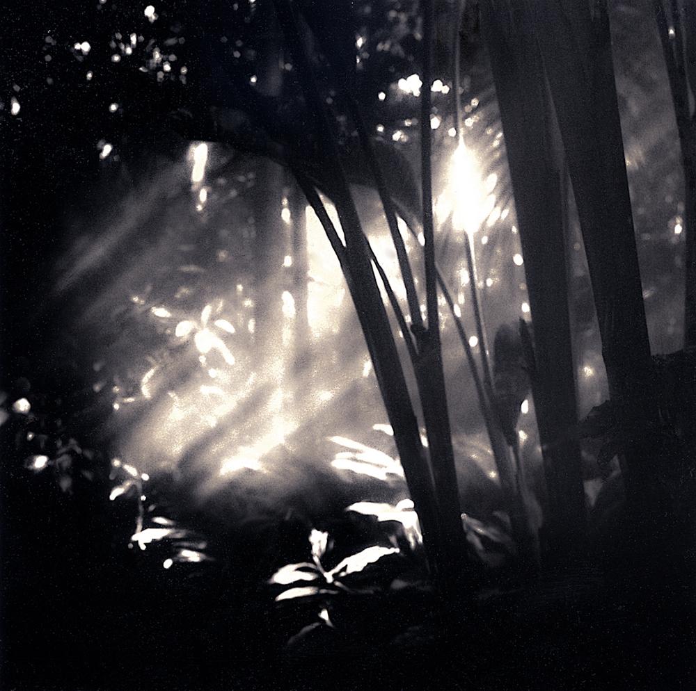 053_into_the_mist-21-1-2.jpg