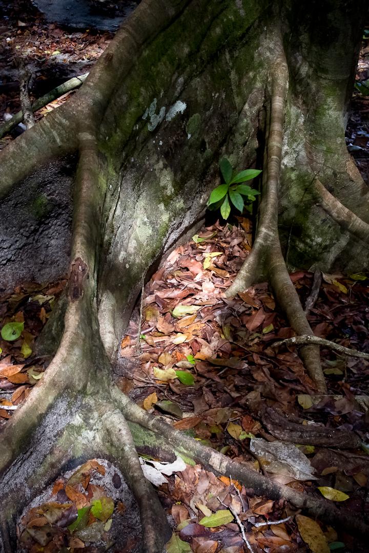 010_Costa_Rica_#2-65-Edit.jpg