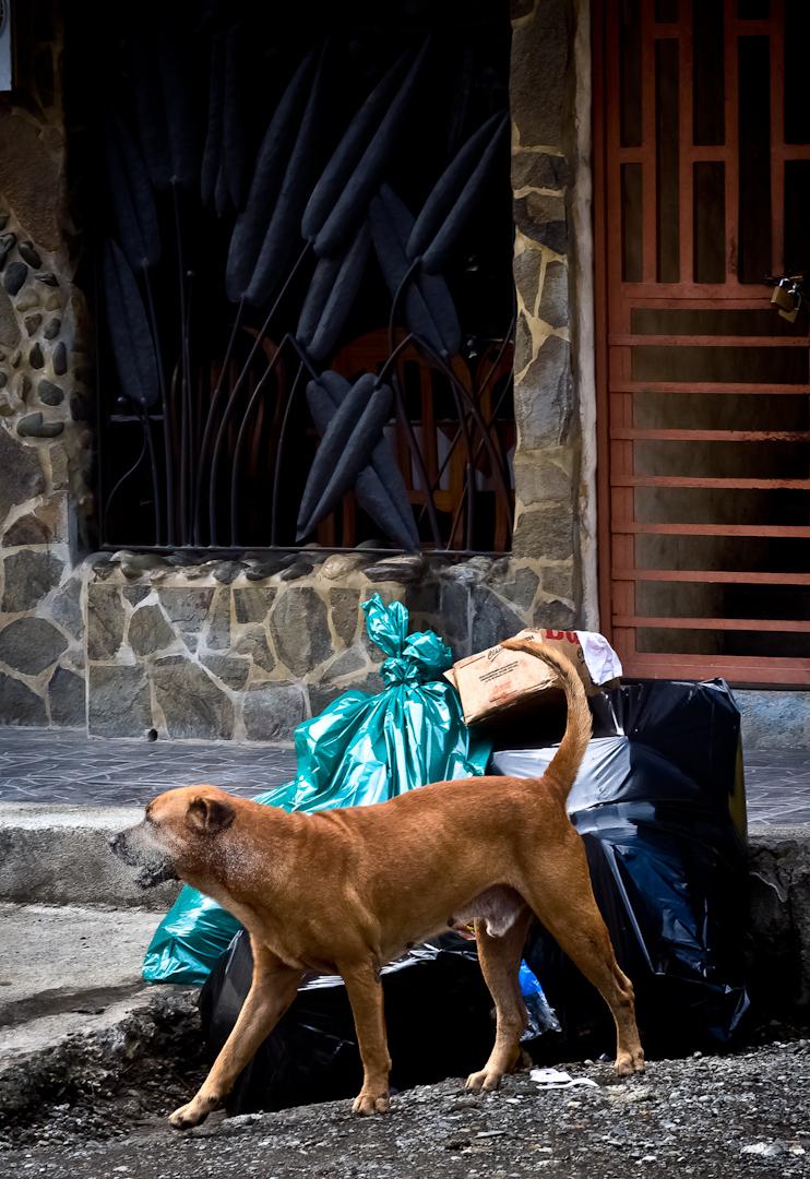 019_Costa_Rica-33.jpg