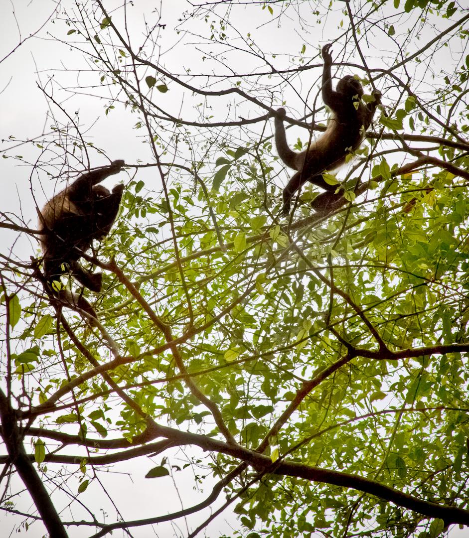 023_Costa_Rica_#2-117-Edit.jpg