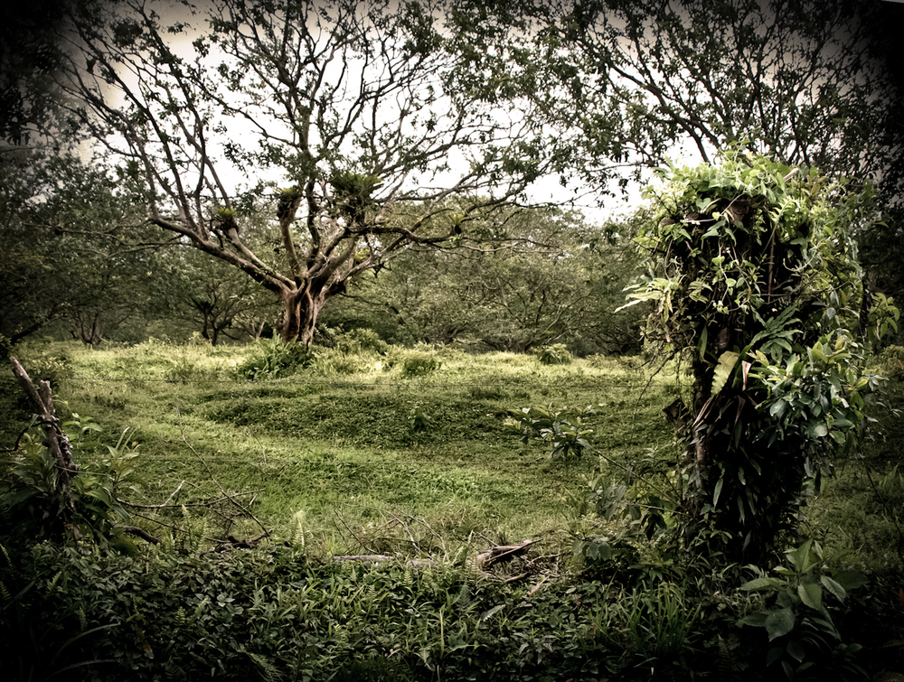 039_Costa_Rica_#2-45-Edit.jpg
