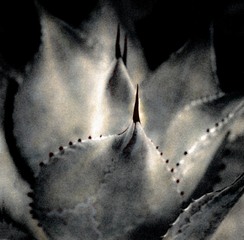 009_cactus needles-2.jpg