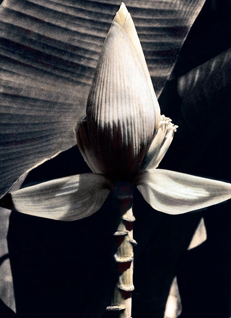 025_banana flower-2.jpg