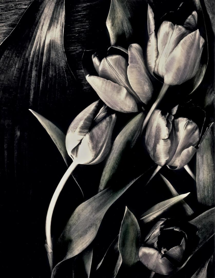 029_Tulips__srgb jpeg.jpg