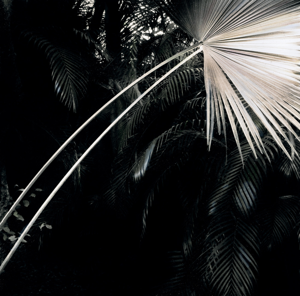 031_leaning palm frond.jpg