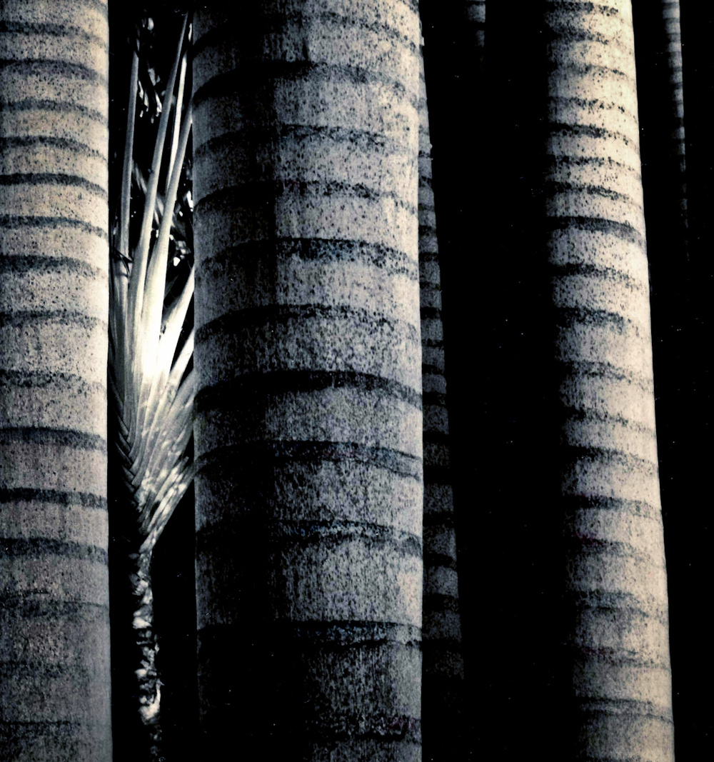 037_Linear Palm Trunks copy 2.jpg