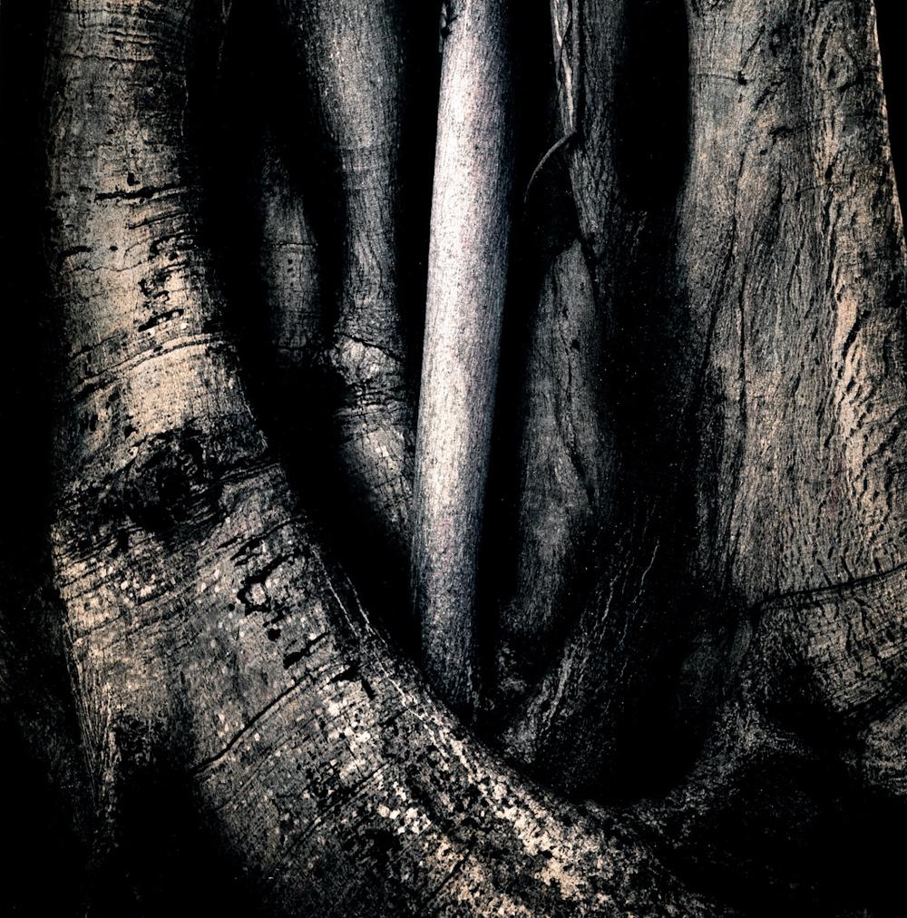 039_banyon mystery-2.jpg
