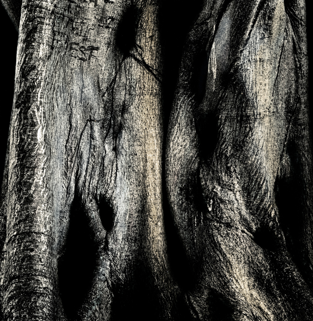041_banyan tree couple.jpg