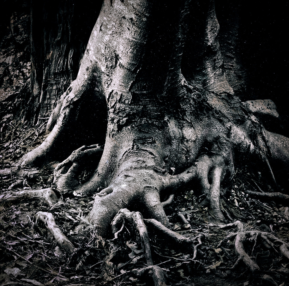 043_gnarly tree roots-2.jpg