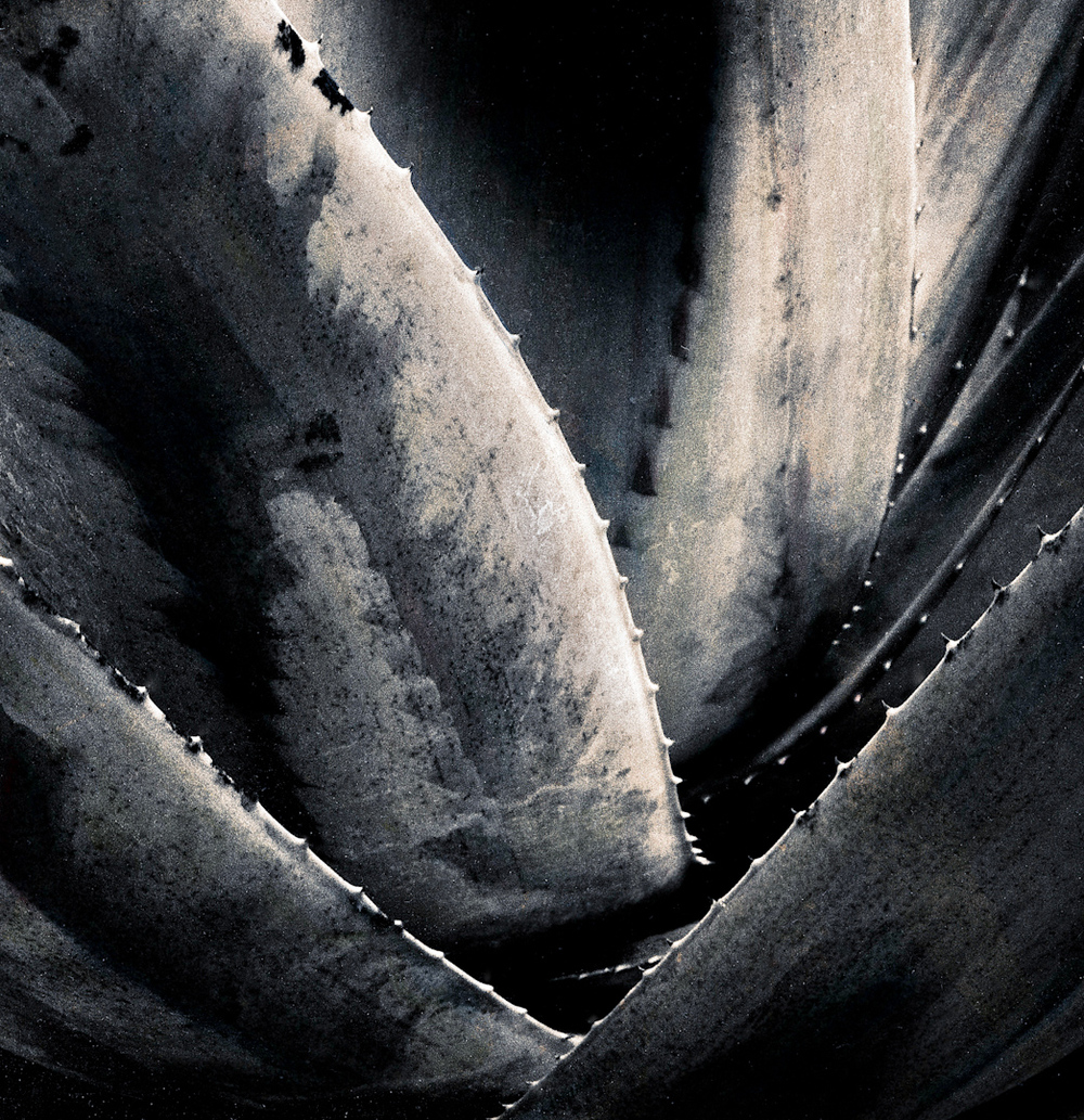 058_cactus edges.jpg
