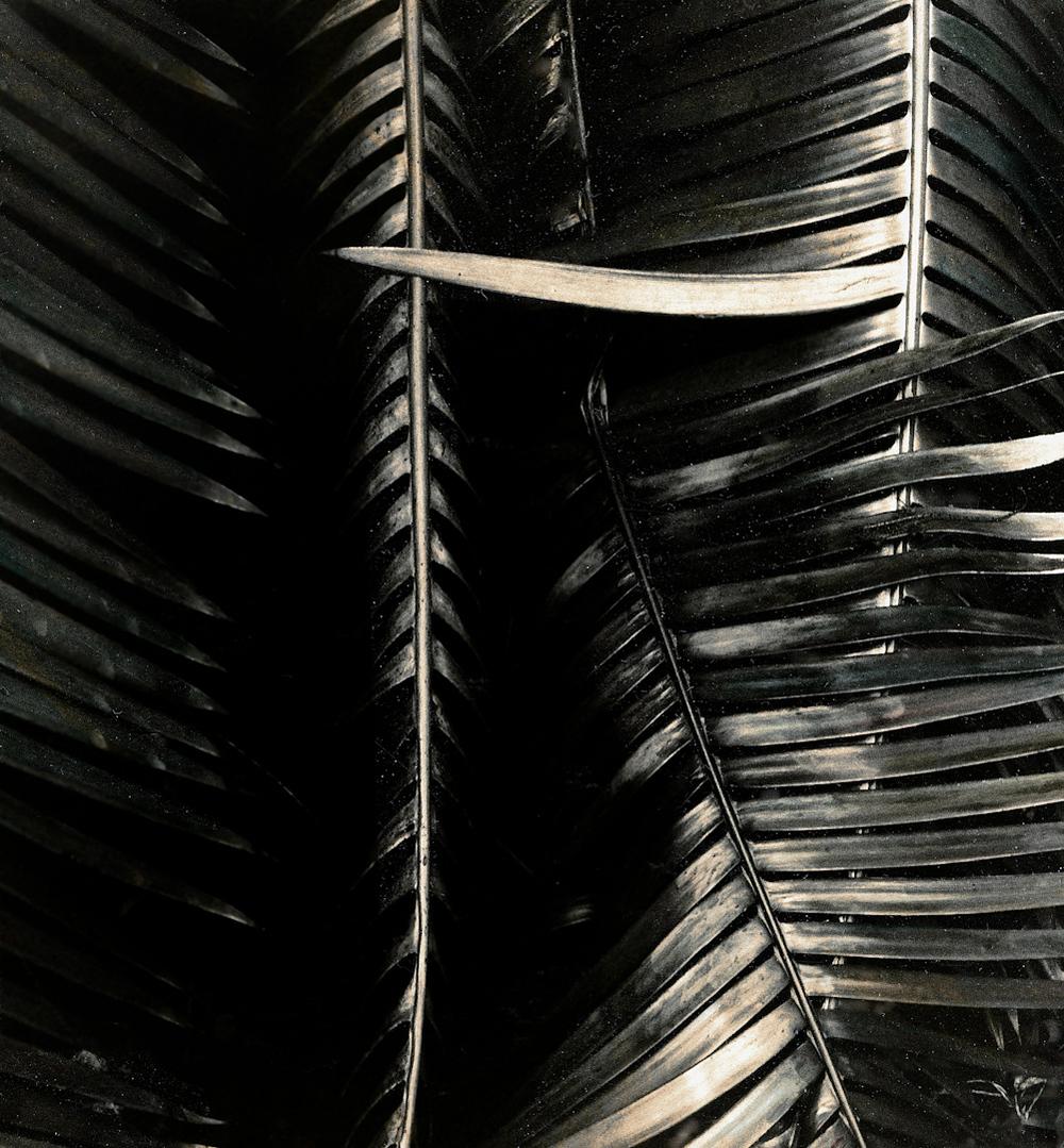 066_palm frond 1.jpg