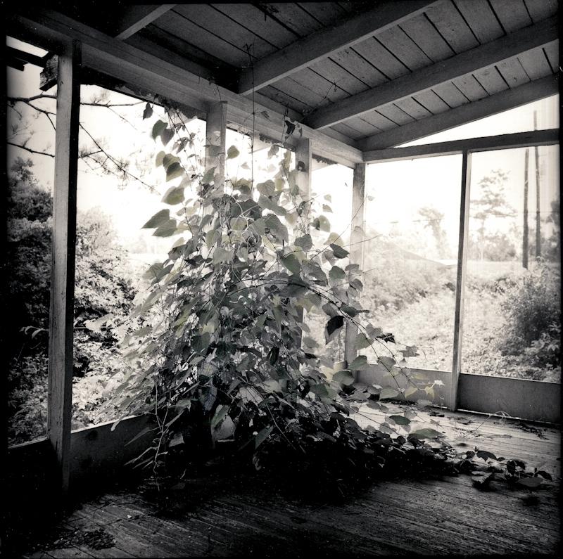 060_Overgrown Porch srgb.jpg