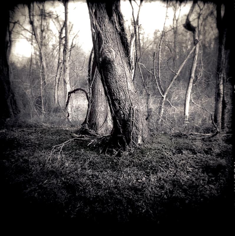 002_Tree Couple srgb-2.jpg