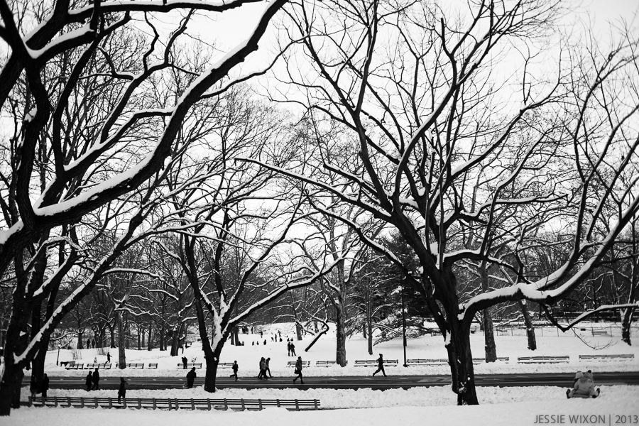 40/365 Central Park after Nemo