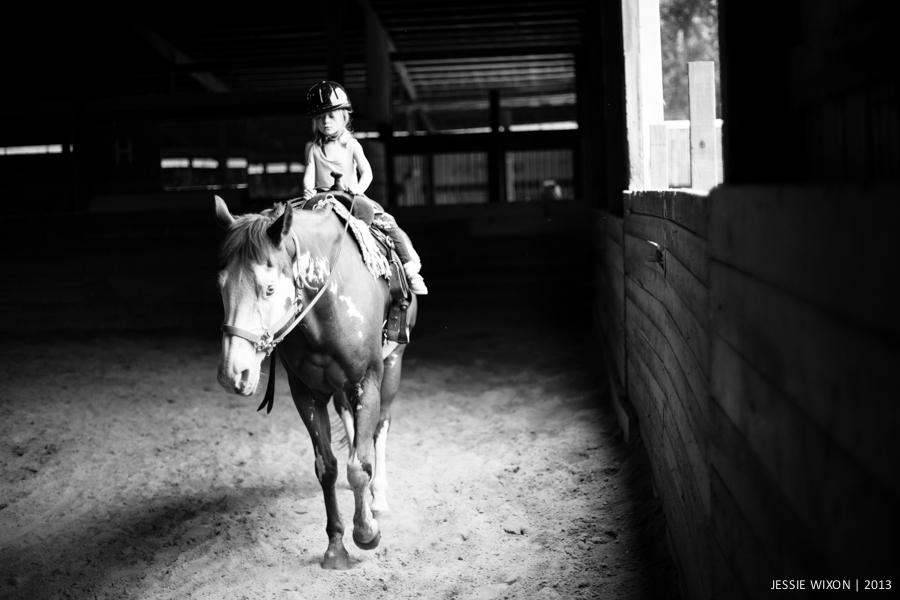 horse-6.jpg
