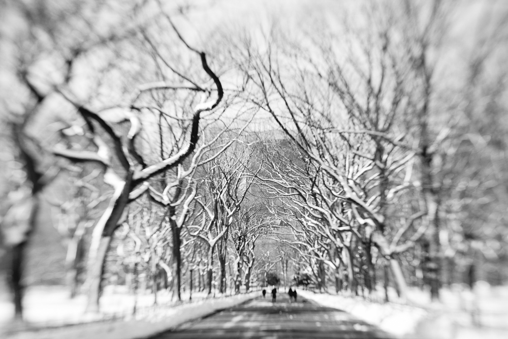 centralparktrees-1.jpg