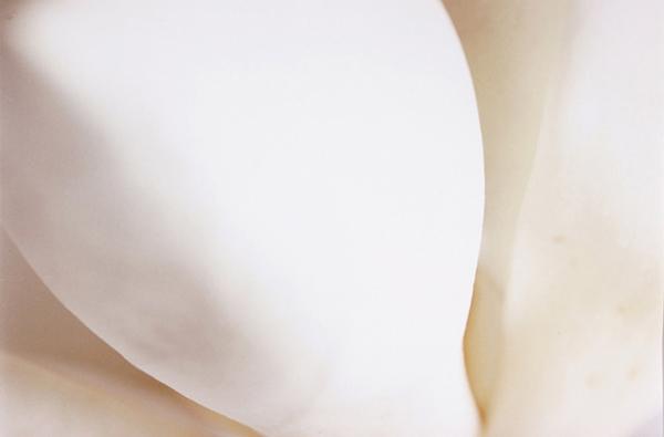Magnolia (Decorum)