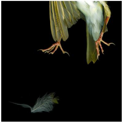 Sparrow Feet