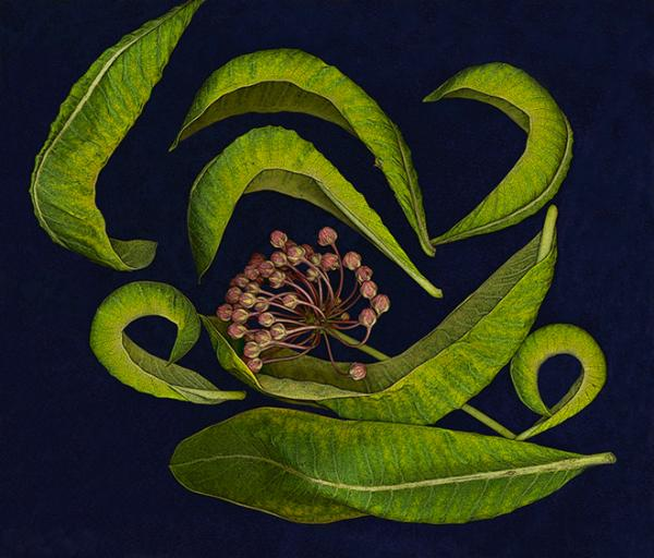 Milkweed Leaves