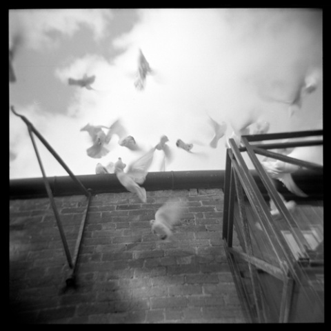 doves 5