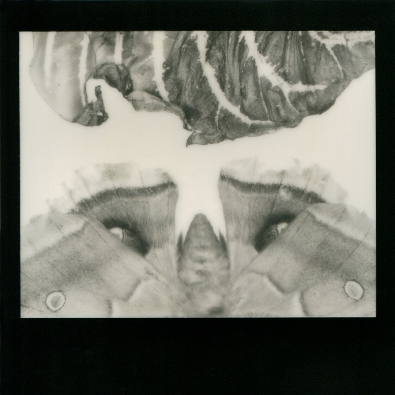Nicole-Gelinas-Remnants03-2012-Instant-Macro-Photography.jpg
