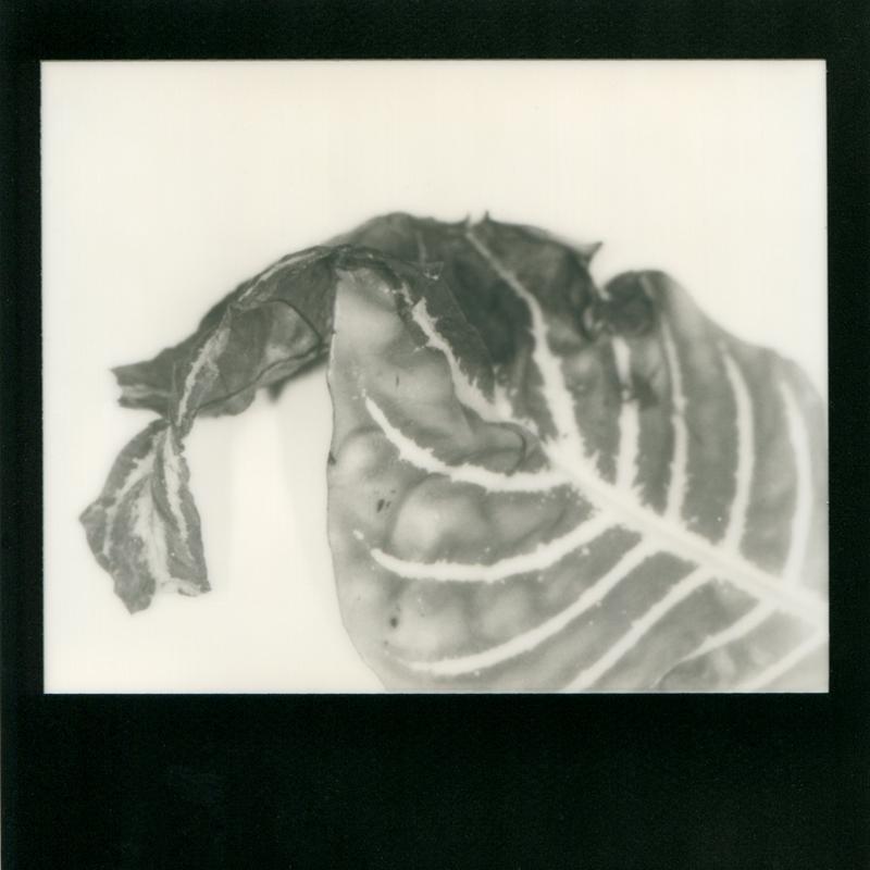 Nicole-Gelinas-Remnants04-2012-Instant-Macro-Photography.jpg