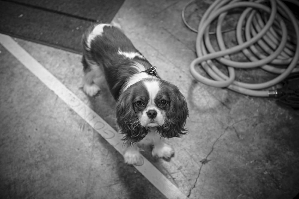 Ken Ball Leica Monochrome-Fergy.jpg