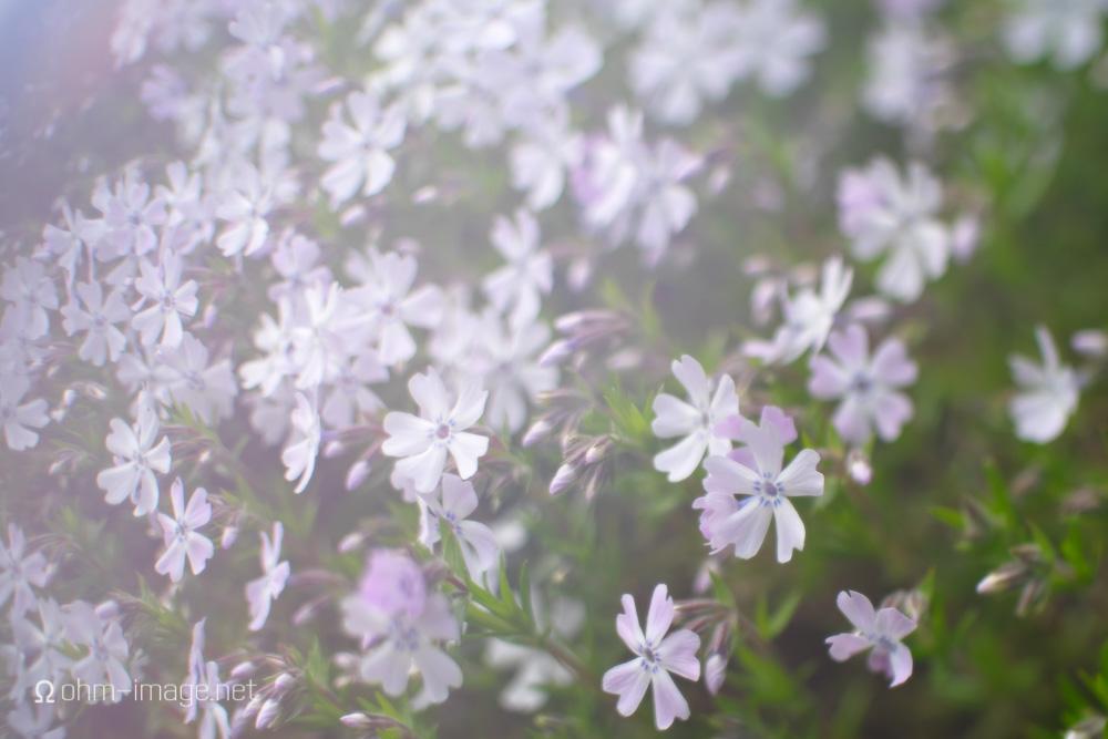 Fujifilm X-T1 hiking city field flowers.jpg
