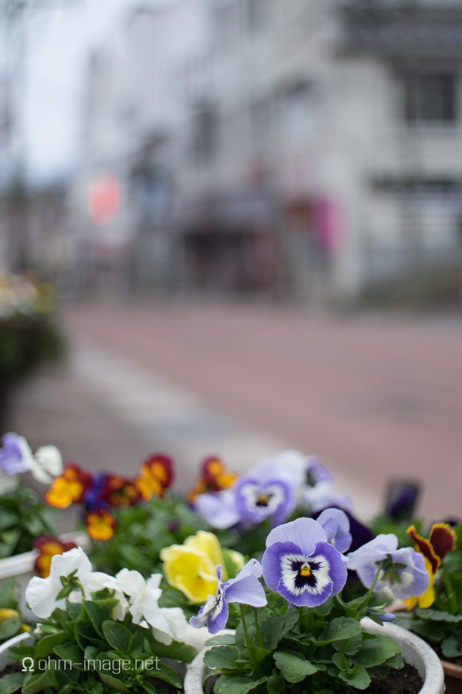 Fujifilm X-T1 hiking city flowers.jpg