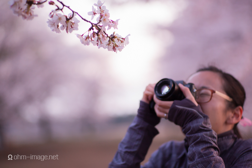 2015 Cherry Blossoms - 04.jpg