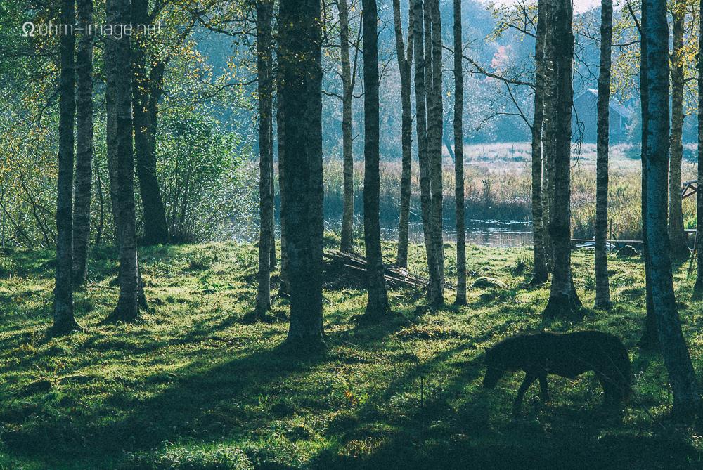 Pony in medow, Vetlanda
