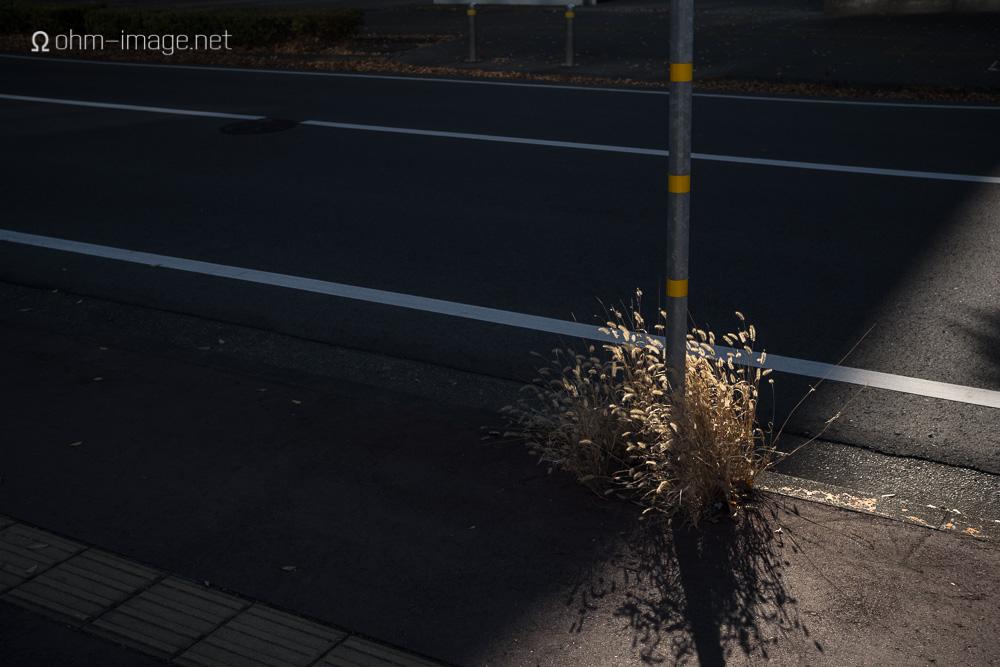 Voigtlander 40 1.2 pole sprout-1.jpg