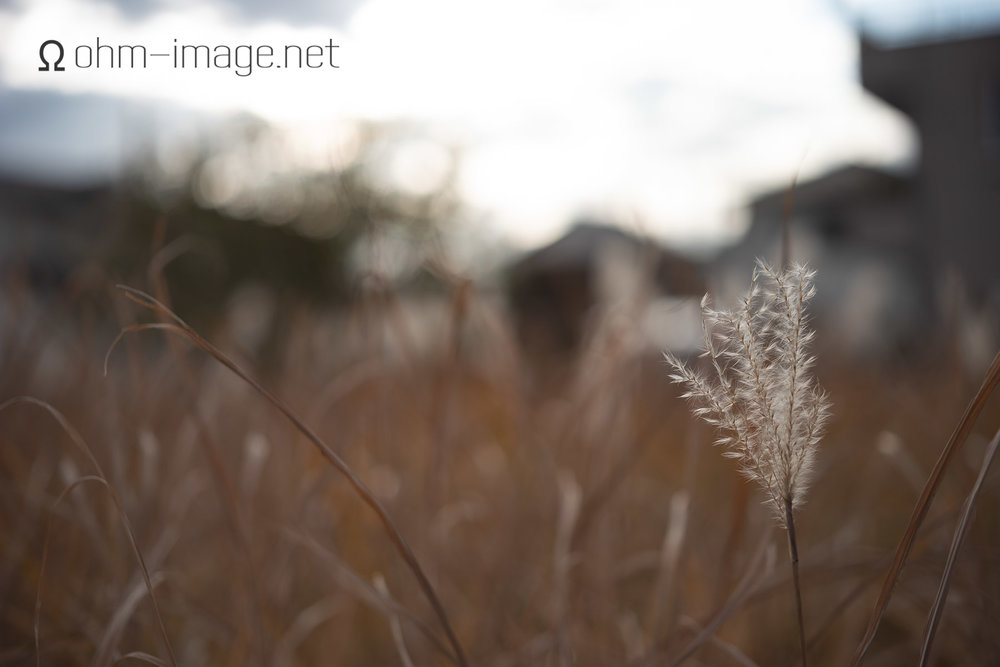 Taking camera: Leica SL (35mm sensor)